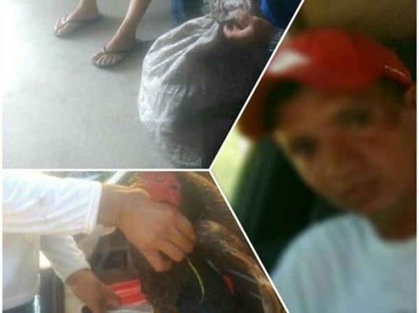 Homem furta galinheiro e é solto por falta de provas