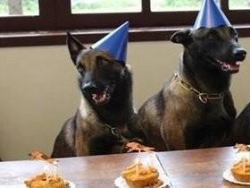 Cães da PM ganham festa com direito a bolo com vale e chapéus