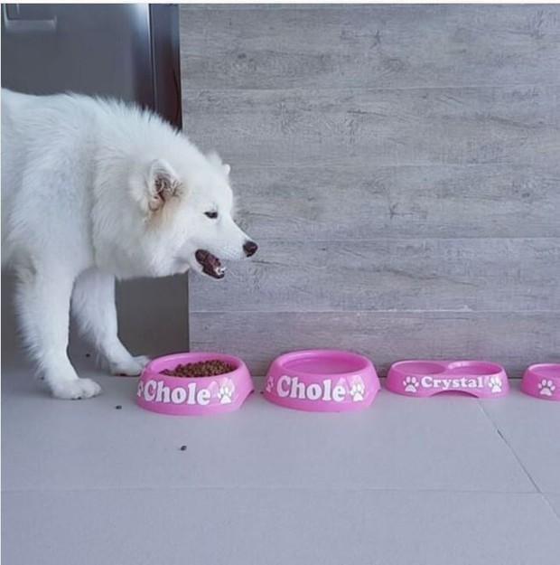 Chloe, a cachorrinha de estimação de Nicole Bahls