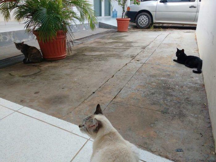 Policiais criam gatas em delegacia e diminuem estresse no trabalho