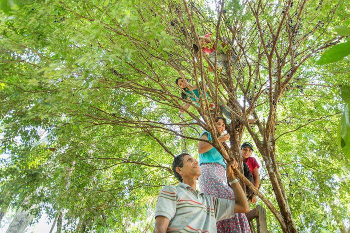 Família planta a própria floresta e vira tema de documentário