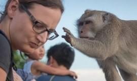 """Macacos ladrões aprendem a """"vender"""" objetos roubados a turistas"""