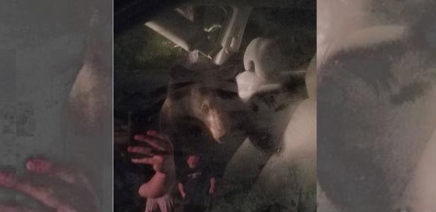 Urso entra em carro, fica preso e buzina até ser solto pela polícia