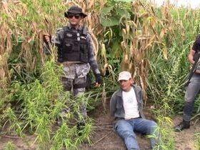 Policia Civil e Militar realizam operação Fumo Zero
