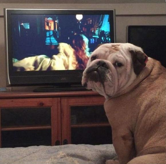 Cão assiste a filme de terror e late para avisar sobre o perigo