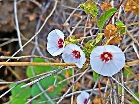 """Incrível : planta """"milagrosa"""" encontrada no Canyon do rio Poti"""