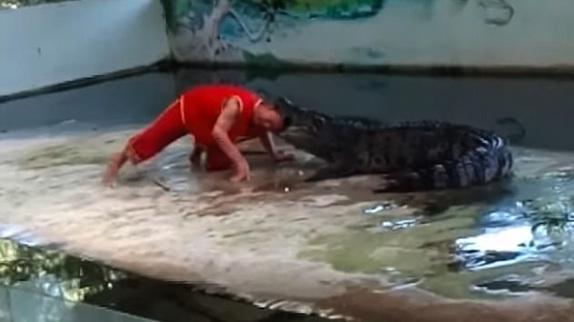 Cuidador de zoológico é mordido na cabeça por crocodilo