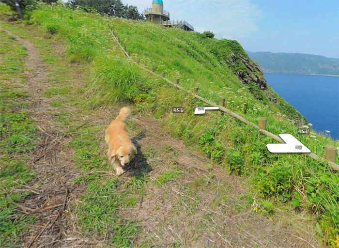 Cachorro segue fotógrafo do Google e faz sucesso na internet