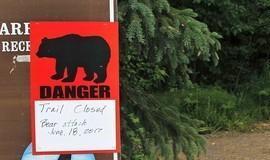 Urso mata adolescente de 16 anos durante corrida no Alasca