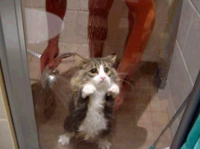 Traumas podem acompanhar o seu gato pela vida toda (Crédito: Reprodução)