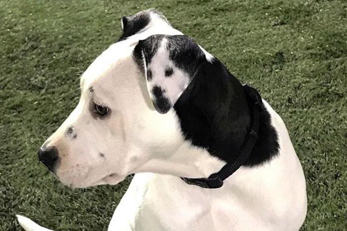 (Crédito: Detalhe em orelha de cachorra chama atenção e viraliza na web)