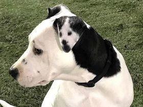 Detalhe em orelha de cachorra chama atenção e viraliza na web
