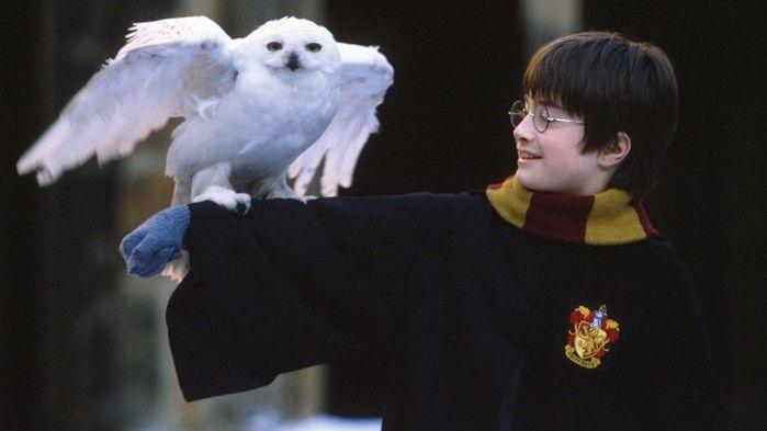 Harry Potter (Crédito: Reprodução )
