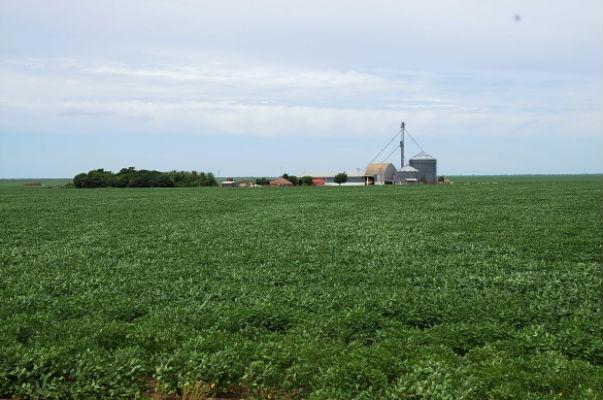 Produção de soja é destaque no Piauí  (Crédito: Reprodução )