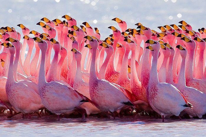 Flamingos (Crédito: Reprodução)