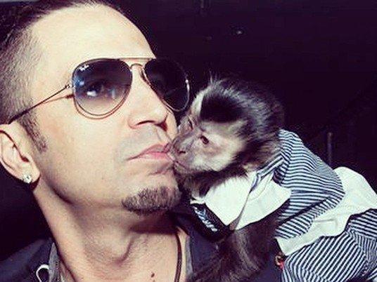 Após sumiço, Latino diz que vai implantar chip no macaco Twelves