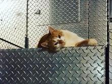 Gatinho adotado por bombeiros nos EUA 'bomba' nas redes sociais