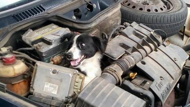 Cachorro ficou preso no motor de carro no Paraná (Crédito: Reprodução)