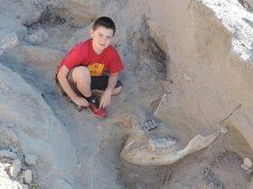 Garoto de 9 anos tropeça e descobre fóssil de um milhão de anos