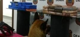 Funcionários do Galeão são presos com  57 kg de cocaína