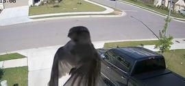Ilusão de ótica faz pássaro flutuar em frente à câmera