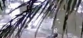 Crocodilo 'devolve' corpo de homem que ele havia atacado em rio
