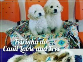 Feirinha do Canil Loose and Free em Teresina