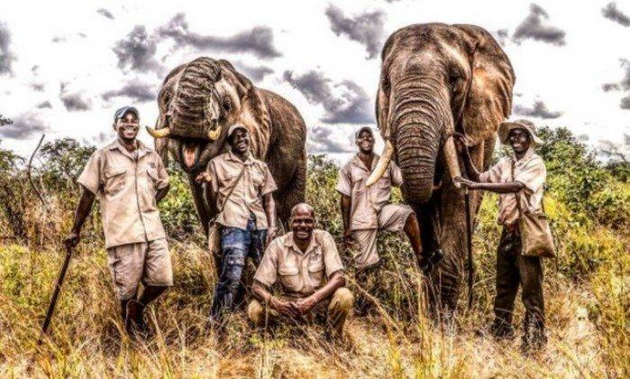 O elefante Mbanjie (direita) foi sacrificado depois da morte do domador (Crédito: Reprodução)