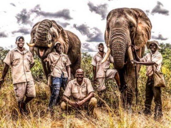 Elefante pisoteia domador até a morte em parque na África