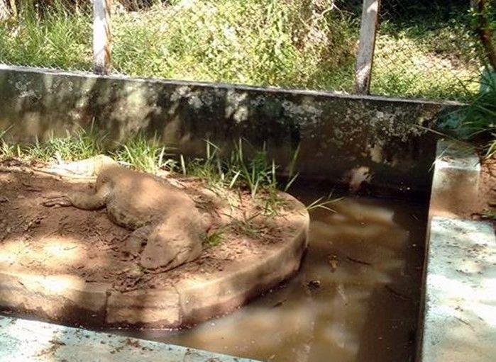 Vísceras do animal foram encontradas próximo ao zoológico  (Crédito: Reprodução)
