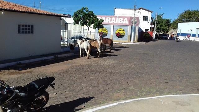 6ª Cavalgada de Dom Expedito Lopes - Imagem 5