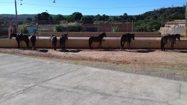 6ª Cavalgada de Dom Expedito Lopes - Imagem 3