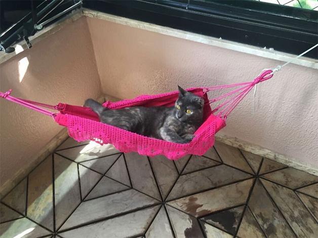 Gato ganha mini rede e faz o maior sucesso nas redes sociais (Crédito: Reprodução/facebook)