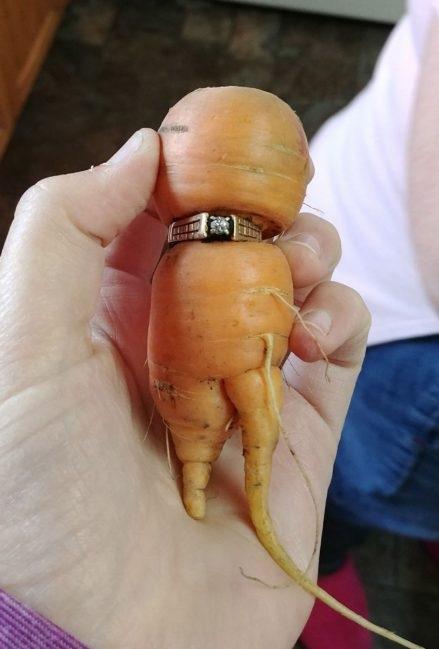 Mulher recupera anel em cenoura após perdê-lo em horta há 13 anos (Crédito: Reprodução/CBC)