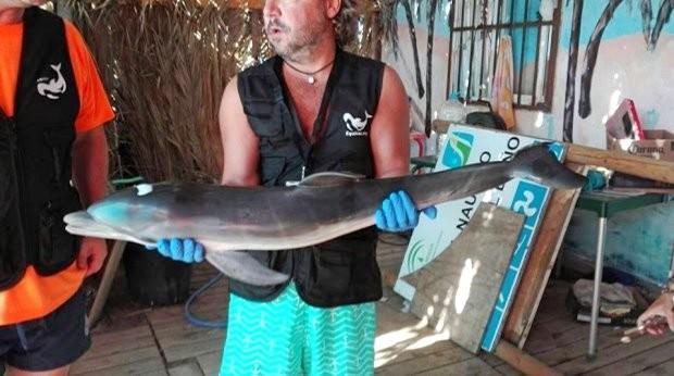 Turistas tiram filhote de golfinho da água e o animal morre (Crédito: Reprodução/Equinac)