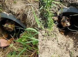 Cadela é resgatada após ser abandonada com patas quebradas; fotos