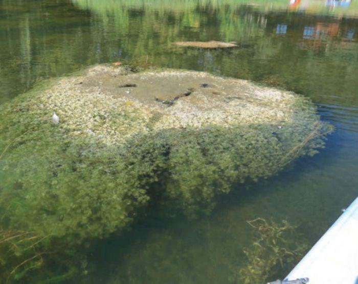 """Chamada de """"alga de pedra"""", a plantinha tem um formato bem peculiar (Crédito: Reprodução)"""