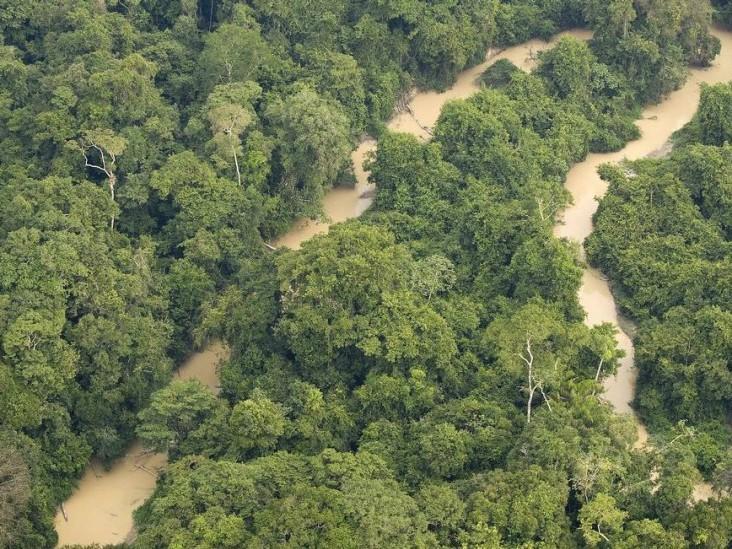Juiz do DF suspende atos que extinguem reserva na Amazônia