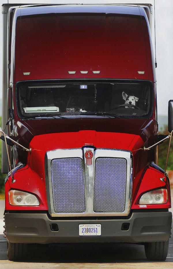 Cachorro é flagrado 'dirigindo' caminhão nos EUA  (Crédito: Butch Comegys)