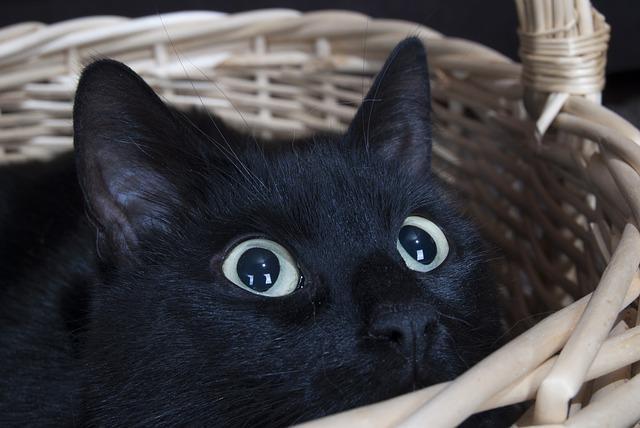Gatos conseguem enxergar raios ultravioleta (Crédito: Reprodução)