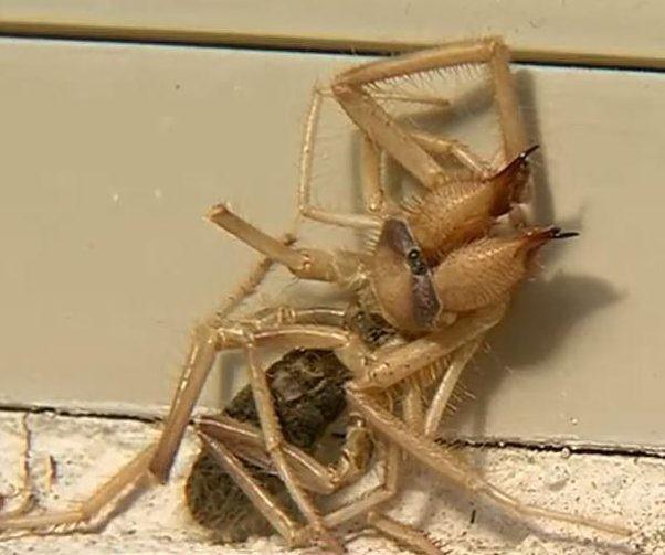 Criatura bizarra, misto de aranha e escorpião, assusta família