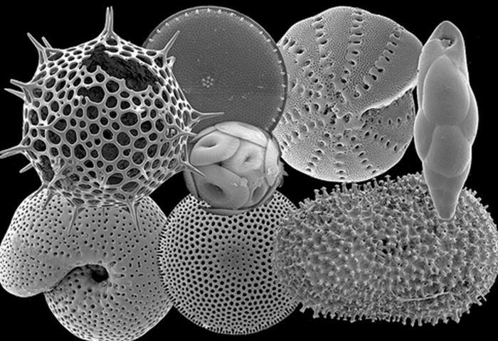 Microfósseis são elementos auxiliares na datação da Vida extinta na Terra (Crédito: Divulgação)