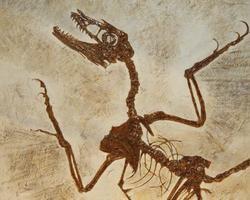 DATAÇÃO: a idade das Vidas extintas e da pré-história do homem