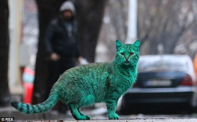 Depois do cachorro azul, agora é a vez do gato verde  (Crédito: Reprodução)