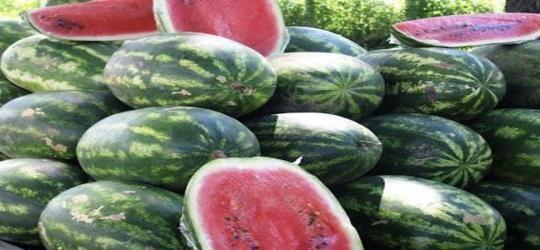 Dia 23, no Caldeirão, festa da melancia