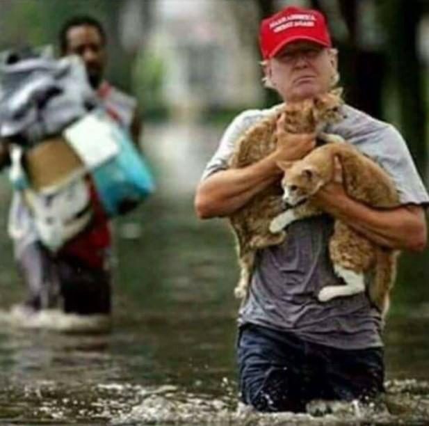 Imagem de Trump 'salvando gatinhos' é falsa (Crédito: Twitter(Helen Kennedy)