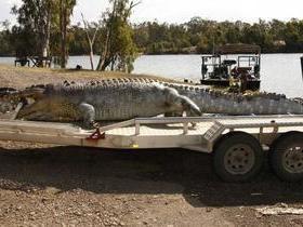 Crocodilo de cinco metros é morto na Austrália e gera preocupação