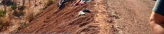 Motociclista morre ao colidir com animal no litoral do Piauí