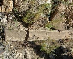 Incrível:Floresta Petrificada de Teresina terá Museu Paleontológico