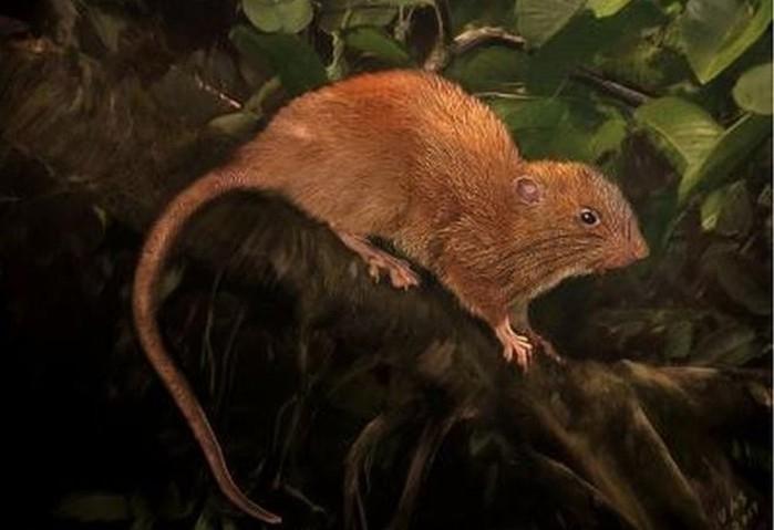 Uma representação da nova espécie descoberta nas Ilhas Salomão (Crédito: Velizar Simeonovski/The Field Museum)